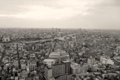 Tokyo-fromskytree