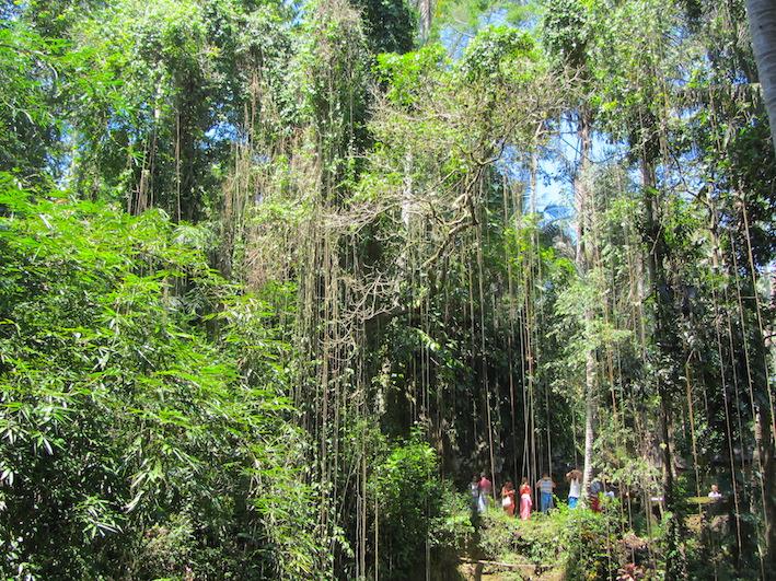 Bali-Foresta