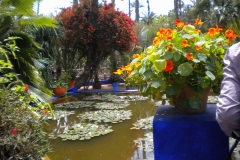 Marrakesh-JardineMajorelle