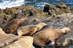 San-Diego-Leoni-marini