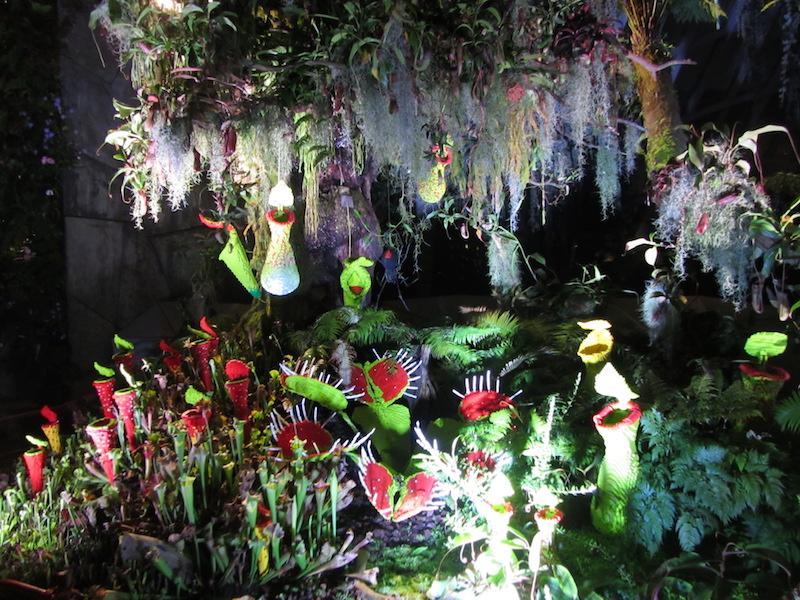 Singapore-piante-carnivore-in-cloud-forest