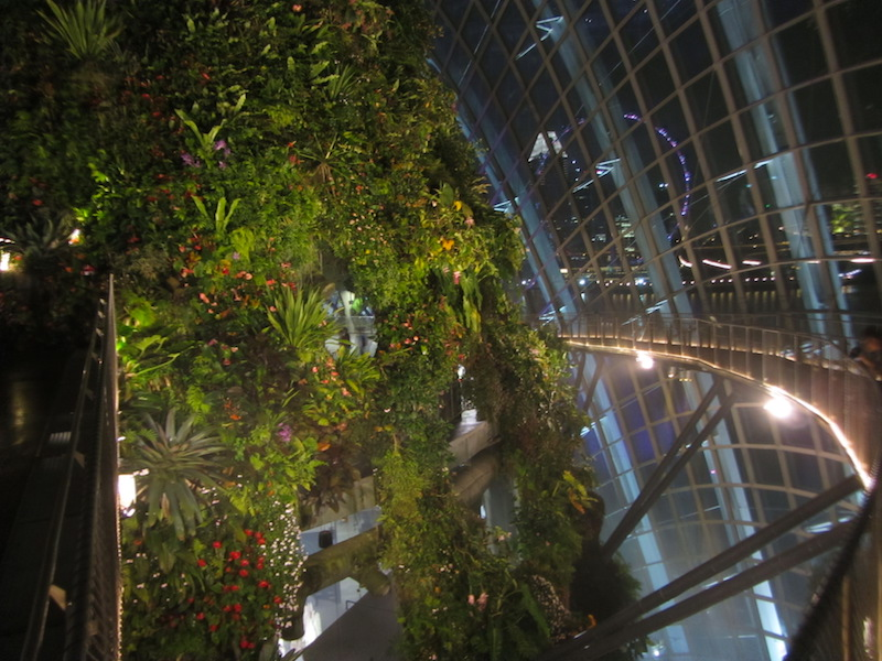 Singapore-piante-in-cloud-forest-