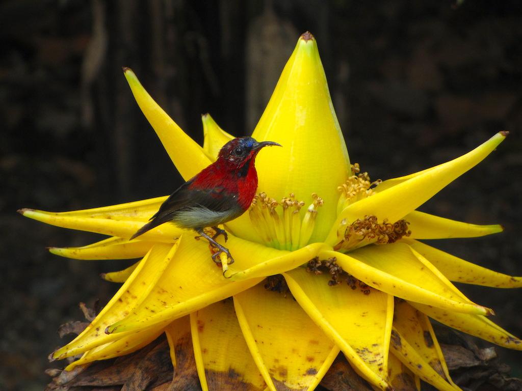 Singapore-uccello-in-giardino-botanico-