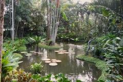 Singapore-giardini-botanici