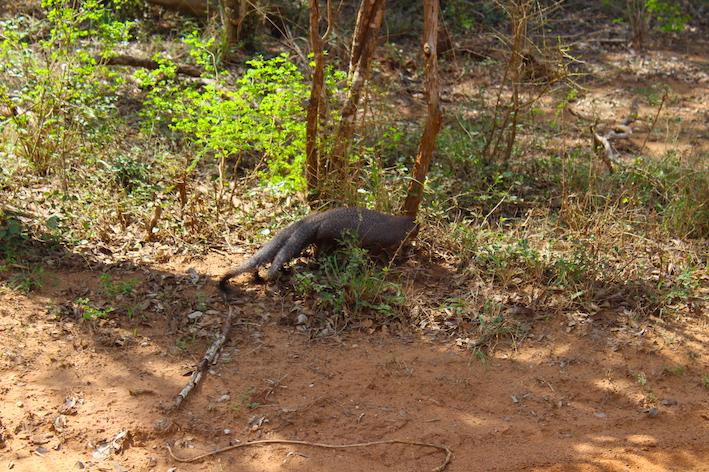 Sri-Lanka-Yala-National-park-1