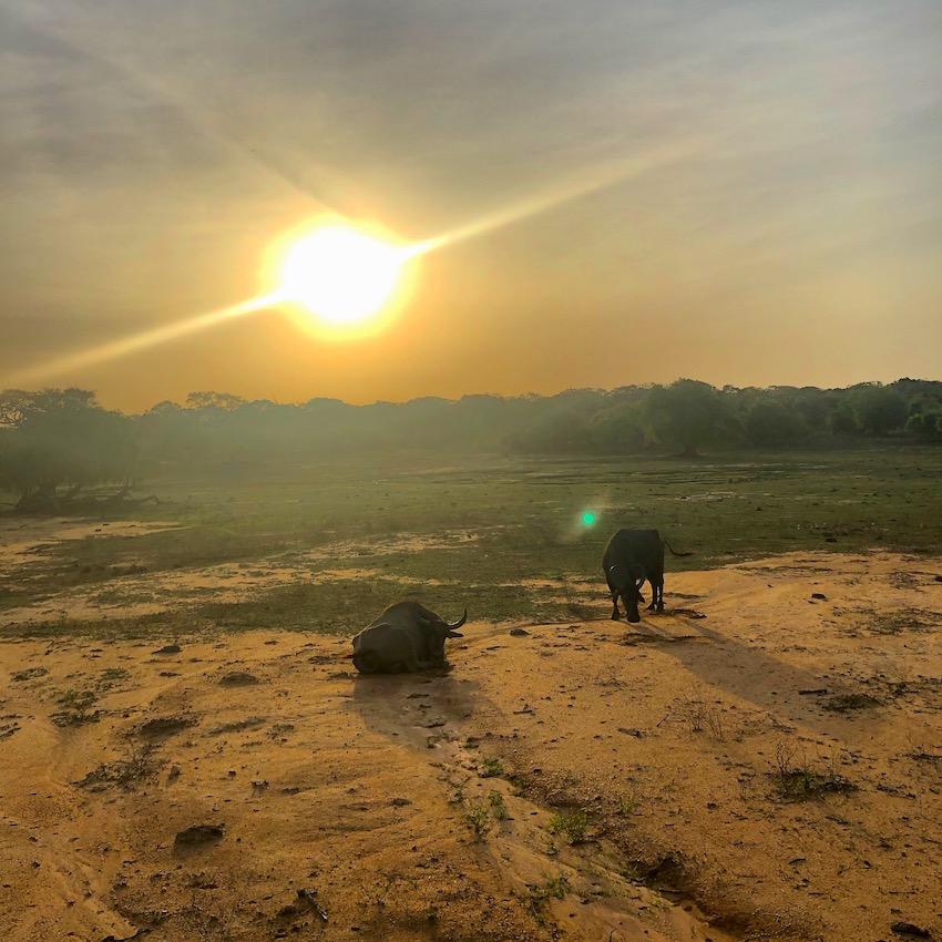 Sri-lanka-Yala-National-park