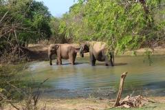 Sri-Lanka-elefanti-a-Yala-National-park3